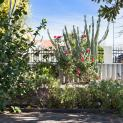 Image for 140 Federation Street, Mount Hawthorn WA 6016